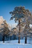 χειμώνας πρωινού Στοκ φωτογραφία με δικαίωμα ελεύθερης χρήσης