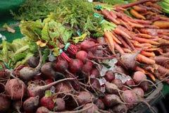 χειμώνας ρίζας veggies Στοκ εικόνες με δικαίωμα ελεύθερης χρήσης