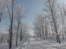 Χειμώνας Ρουμανία 2016 Στοκ Εικόνες