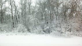 Χειμώνας σε Krasnodar Στοκ Φωτογραφίες