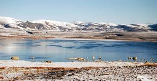 χειμώνας σκηνής λιμνών Στοκ Φωτογραφίες
