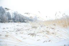 χειμώνας σκηνής Στοκ Φωτογραφίες