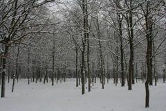 χειμώνας σκηνής Στοκ Εικόνα