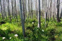 Χειμώνας στα δάση Στοκ φωτογραφία με δικαίωμα ελεύθερης χρήσης
