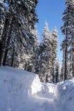Χειμώνας στα βουνά Carpatian Ουκρανία Στοκ Φωτογραφία