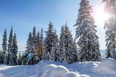 Χειμώνας στα βουνά Carpatian Ουκρανία Στοκ Εικόνες