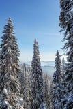 Χειμώνας στα βουνά Carpatian Ουκρανία Στοκ φωτογραφίες με δικαίωμα ελεύθερης χρήσης