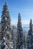 Χειμώνας στα βουνά Carpatian Ουκρανία Στοκ Εικόνα