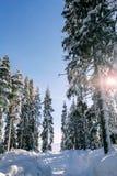 Χειμώνας στα βουνά Carpatian Ουκρανία Στοκ φωτογραφία με δικαίωμα ελεύθερης χρήσης