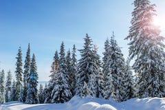 Χειμώνας στα βουνά Carpatian Στοκ φωτογραφίες με δικαίωμα ελεύθερης χρήσης