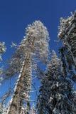 Χειμώνας στα βουνά Carpatian Ukrane Στοκ φωτογραφία με δικαίωμα ελεύθερης χρήσης