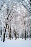 Χειμώνας στα δέντρα πάρκων στο χιόνι στοκ φωτογραφία με δικαίωμα ελεύθερης χρήσης