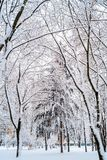 Χειμώνας στα δέντρα πάρκων στο χιόνι στοκ εικόνες με δικαίωμα ελεύθερης χρήσης