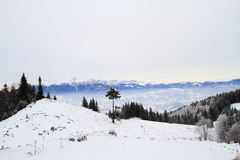 Χειμώνας στα ρουμανικά βουνά Στοκ φωτογραφίες με δικαίωμα ελεύθερης χρήσης