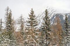 Χειμώνας στα υψηλά βουνά Tatras Στοκ Εικόνες