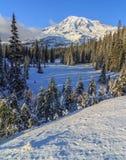 Χειμώνας στην ΑΜ Δέντρα και χλόη στοκ φωτογραφίες