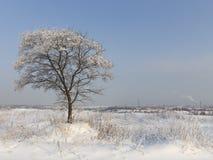 Χειμώνας στην περιοχή της Μόσχας, της Ρωσίας Στοκ Εικόνα