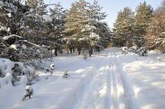 Χειμώνας στη βόρεια Ουκρανία στοκ φωτογραφίες