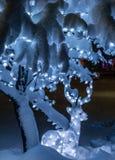 Χειμώνας στη Μοντάνα 13 Στοκ φωτογραφίες με δικαίωμα ελεύθερης χρήσης