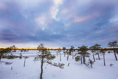 Χειμώνας στο έλος Ķemeri Στοκ εικόνα με δικαίωμα ελεύθερης χρήσης