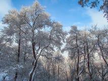 Χειμώνας στο βουνό, Βουλγαρία Στοκ Φωτογραφίες