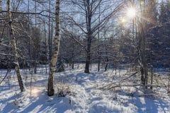 Χειμώνας στο δάσος Στοκ Εικόνες