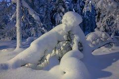 Χειμώνας στο δάσος Στοκ εικόνα με δικαίωμα ελεύθερης χρήσης