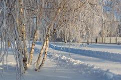 Χειμώνας στο πάρκο Στοκ Φωτογραφίες
