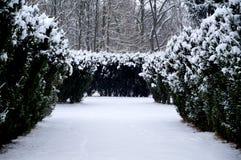 Χειμώνας στο πάρκο Στοκ φωτογραφίες με δικαίωμα ελεύθερης χρήσης
