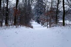 Χειμώνας στο πάρκο Στοκ φωτογραφία με δικαίωμα ελεύθερης χρήσης