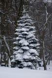Χειμώνας στο πάρκο Στοκ εικόνα με δικαίωμα ελεύθερης χρήσης