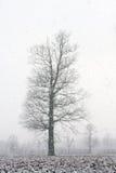 Χειμώνας στο πεδίο Στοκ Εικόνες