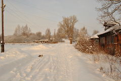 Χειμώνας στο χωριό, ηλιόλουστο πρωί, γάτα Στοκ Φωτογραφίες