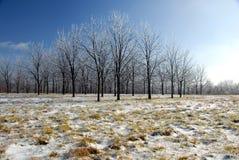 χειμώνας σχηματισμού Στοκ εικόνα με δικαίωμα ελεύθερης χρήσης