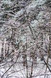Χειμώνας. Τήξη. Στοκ Εικόνες