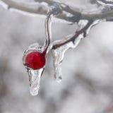 Χειμώνας. Τήξη. Στοκ φωτογραφία με δικαίωμα ελεύθερης χρήσης