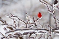 Χειμώνας. Τήξη. στοκ φωτογραφίες