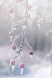 Χειμώνας. Τήξη. Στοκ φωτογραφίες με δικαίωμα ελεύθερης χρήσης