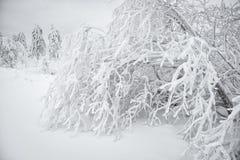 χειμώνας της Ουκρανίας ήλιων ακτίνων πορτρέτου πεζοπορώ βραδιού της Κριμαίας Στοκ Εικόνες
