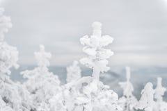 χειμώνας της Ουκρανίας ήλιων ακτίνων πορτρέτου πεζοπορώ βραδιού της Κριμαίας Στοκ Εικόνα
