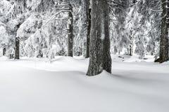 χειμώνας της Ουκρανίας ήλιων ακτίνων πορτρέτου πεζοπορώ βραδιού της Κριμαίας Στοκ εικόνα με δικαίωμα ελεύθερης χρήσης