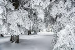 χειμώνας της Ουκρανίας ήλιων ακτίνων πορτρέτου πεζοπορώ βραδιού της Κριμαίας Στοκ φωτογραφίες με δικαίωμα ελεύθερης χρήσης