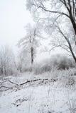 χειμώνας της Πετρούπολης ST πάρκων νησιών jelagin Στοκ Φωτογραφίες