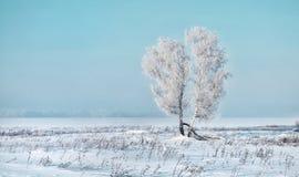 Χειμώνας της Σιβηρίας παγετός Στοκ εικόνες με δικαίωμα ελεύθερης χρήσης