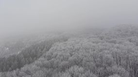 Χειμώνας της Misty σε ένα χιονώδες δάσος φιλμ μικρού μήκους