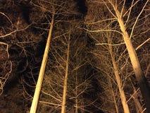 Χειμώνας τη νύχτα Στοκ Εικόνα