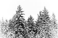 χειμώνας τοπίου Στοκ εικόνες με δικαίωμα ελεύθερης χρήσης