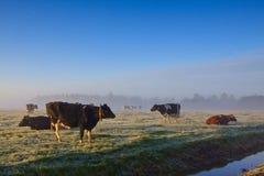 χειμώνας τοπίων αγελάδων Στοκ Εικόνες