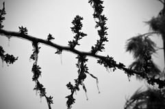 Χειμώνας του Τέξας στοκ εικόνα