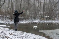 Χειμώνας 9 τροφών πουλιών παπιών κύκνων λιμνών σίτισης γυναικών Στοκ Φωτογραφίες